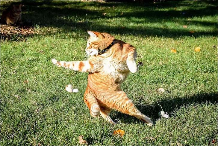 15-perfectly-timed-cat-photos-that-will-keep-you-laughing_1.jpg