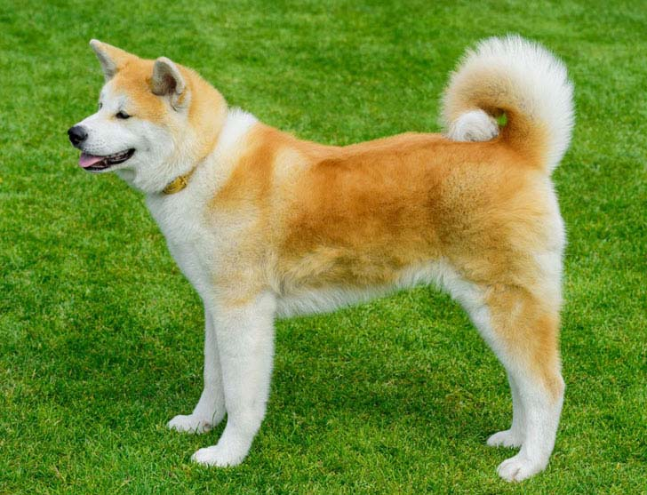 18-most-loyal-dog-breeds_17