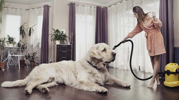 33-biggest-dogs-in-the-world_1.jpg