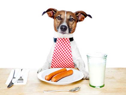 10 Foods Your Dog Should Never Eat