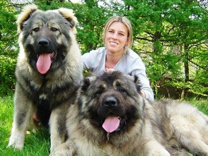 12 Biggest Dog Breeds In The World That You'd Wish You Own
