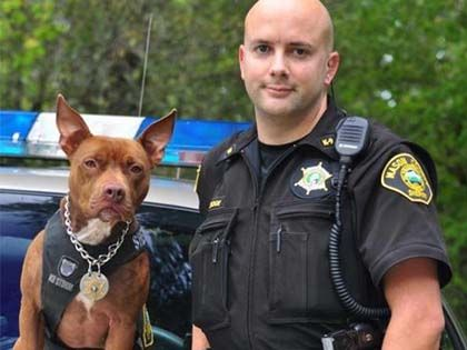 Police Officers Needed Cheaper K9s, So They Went To The Pound And Adopted The Dogs No One Wanted