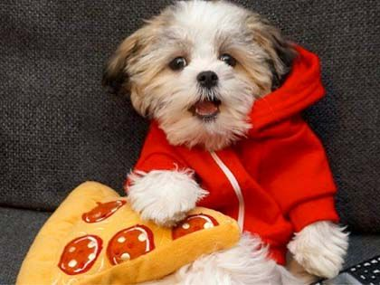 The Benji Dog Finally Chooses Pizza As The Best Friend