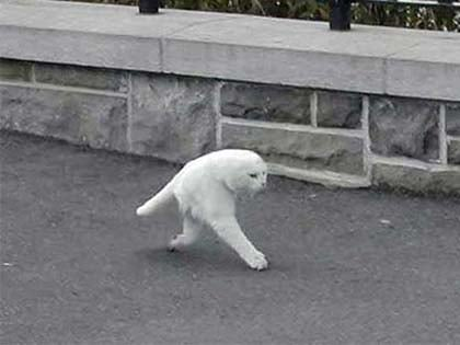 These 13 Scenes Caught On Google Street View Will Amaze You