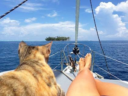 "This Cat Travels Around The World With Her ""Mom"" Who Quits Her Job"