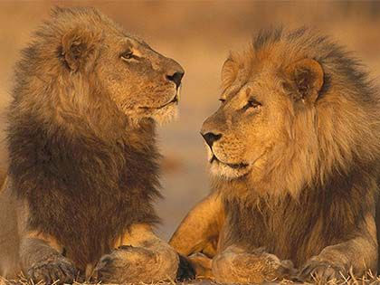 Top 10 Game Reserves In Africa