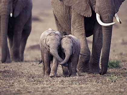 World Elephant Day: 16 Life Lessons We Can Learn From Elephants