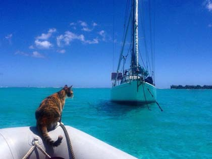 You Won't Believe The Cat Has Been Traveling Around The World Until You Watch The Video