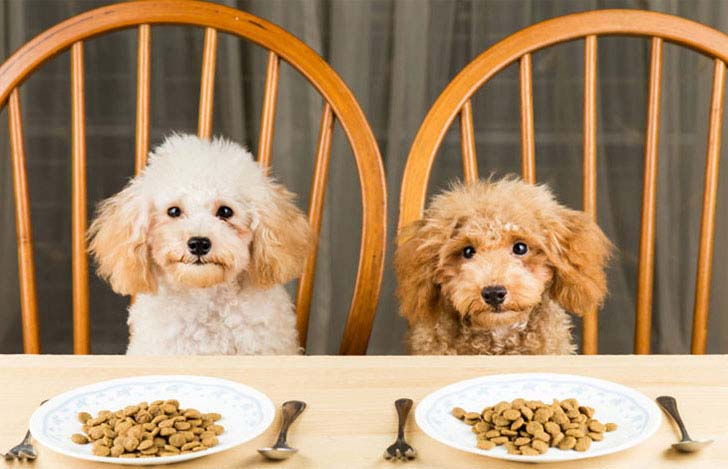 10-foods-your-dogs-should-never-eat_1