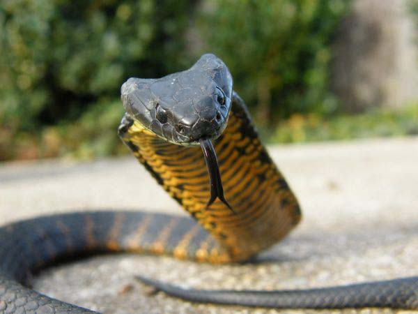 10-worlds-deadliest-snakes-ranked_10