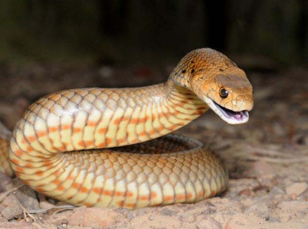 10-worlds-deadliest-snakes-ranked_2