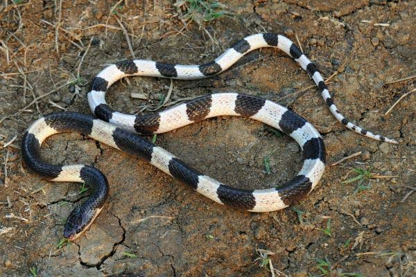 10-worlds-deadliest-snakes-ranked_3