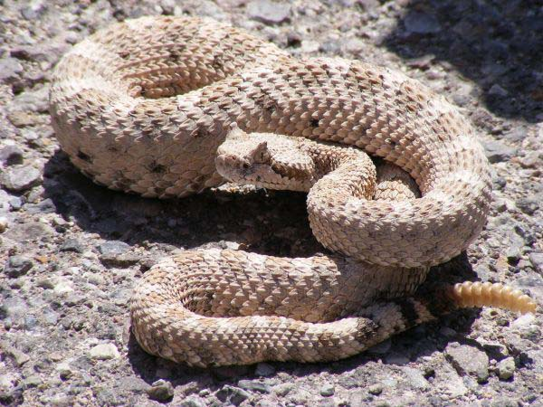 10-worlds-deadliest-snakes-ranked_6