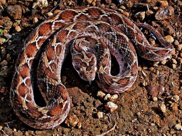 10-worlds-deadliest-snakes-ranked_8