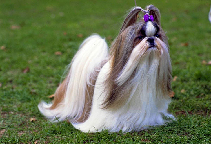 15-most-elegant-dog-breeds-as-your-noble-companion_5