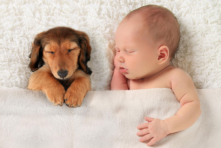 15-temperate-dog-breeds-for-home-with-babies_1