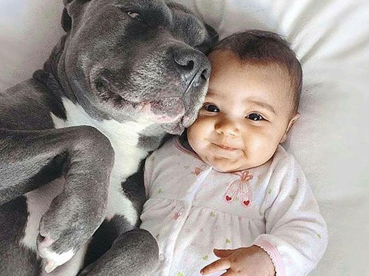 15-temperate-dog-breeds-for-home-with-babies_10