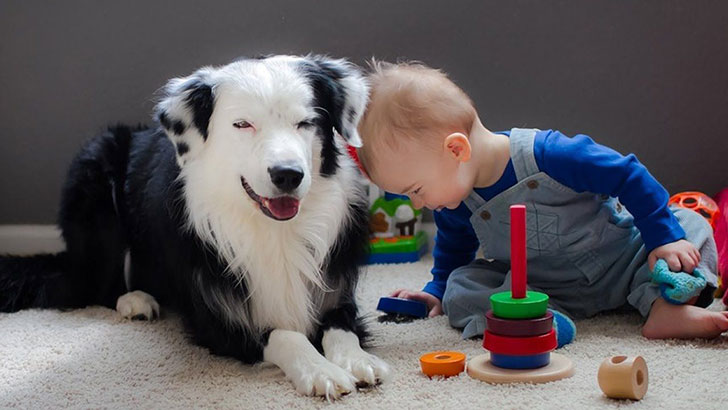 15-temperate-dog-breeds-for-home-with-babies_2