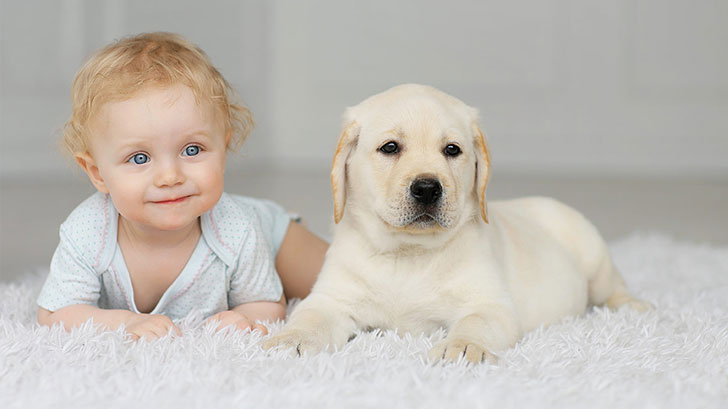 15-temperate-dog-breeds-for-home-with-babies_3