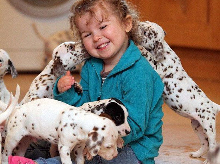 15-temperate-dog-breeds-for-home-with-babies_4