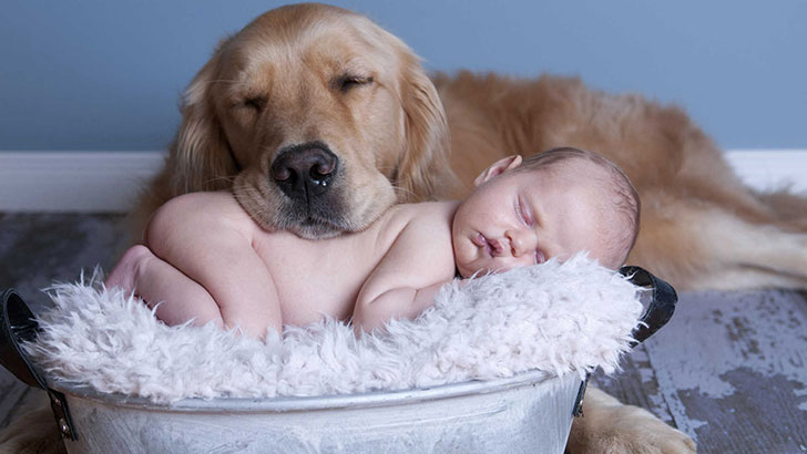 15-temperate-dog-breeds-for-home-with-babies_7