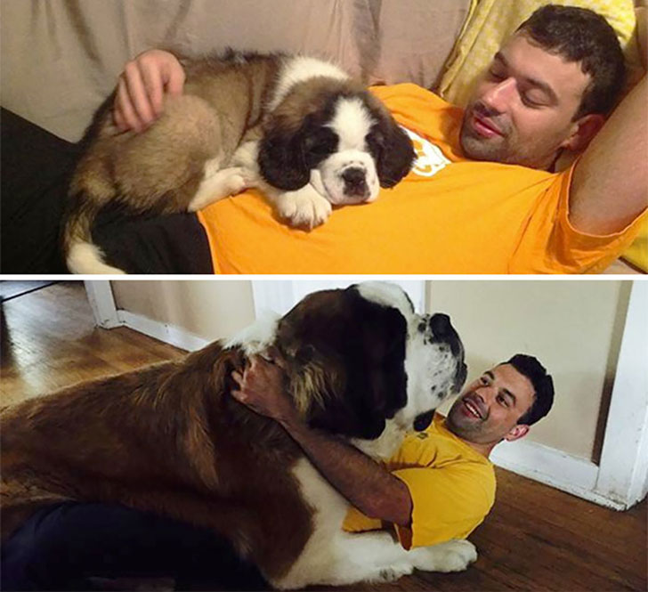 19-pics-that-show-some-dogs-are-forever-a-puppy-in-your-arms_2