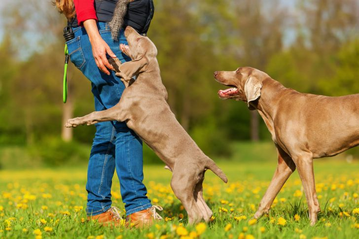20 Common Dog Behaviors Explained_7