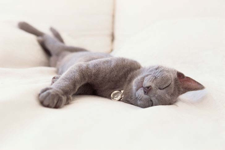 20-pictures-that-prove-cats-can-sleep-purretty-much-anywhere_1