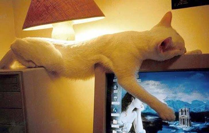 20-pictures-that-prove-cats-can-sleep-purretty-much-anywhere_12