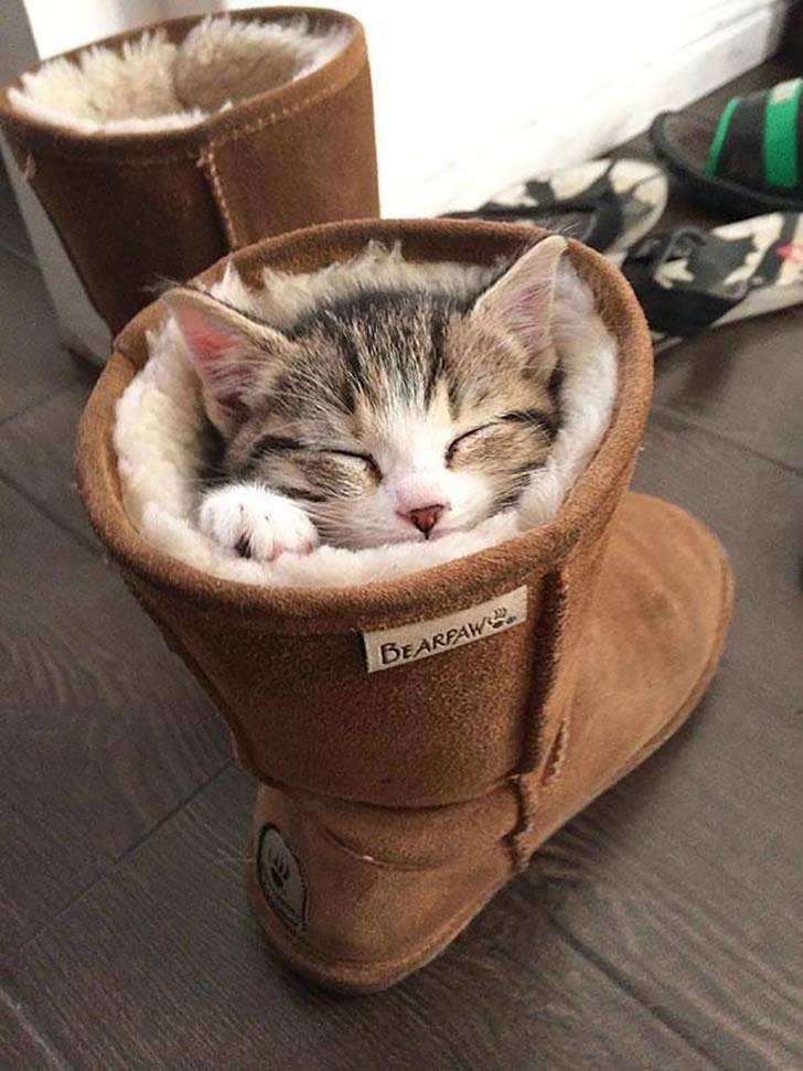 20-pictures-that-prove-cats-can-sleep-purretty-much-anywhere_13