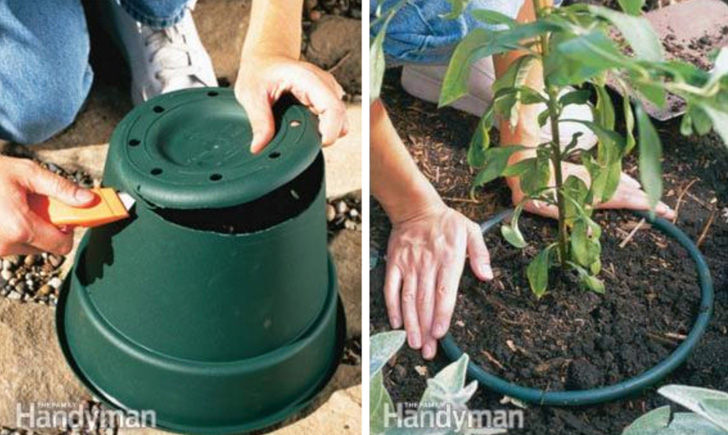 20-practical-gardening-tips-to-make-gardening-easy-and-fruitful_20