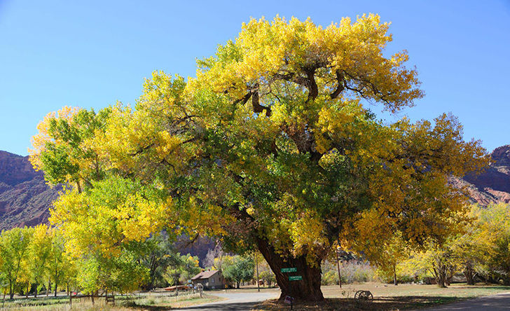 20-trees-you-should-never-consider-planting-in-your-yard_1