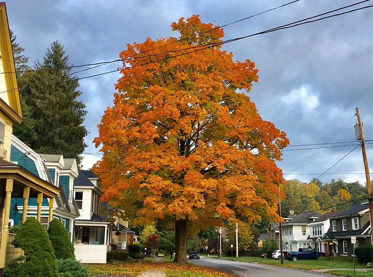 20-trees-you-should-never-consider-planting-in-your-yard_13