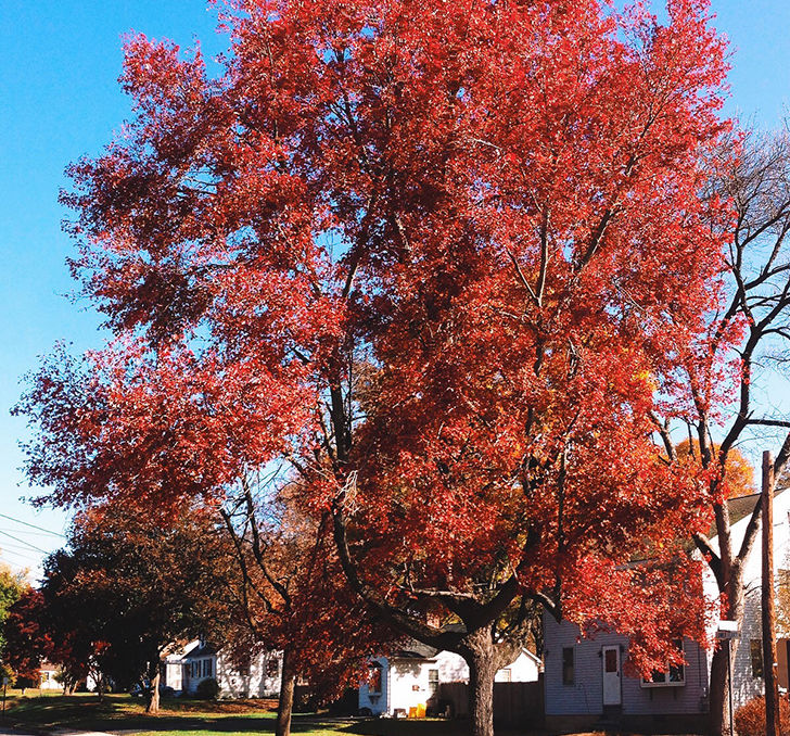 20-trees-you-should-never-consider-planting-in-your-yard_5