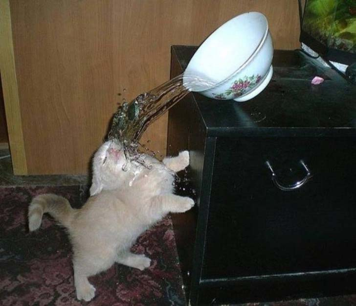 21-cats-who-definitely-regret-their-decisions_13