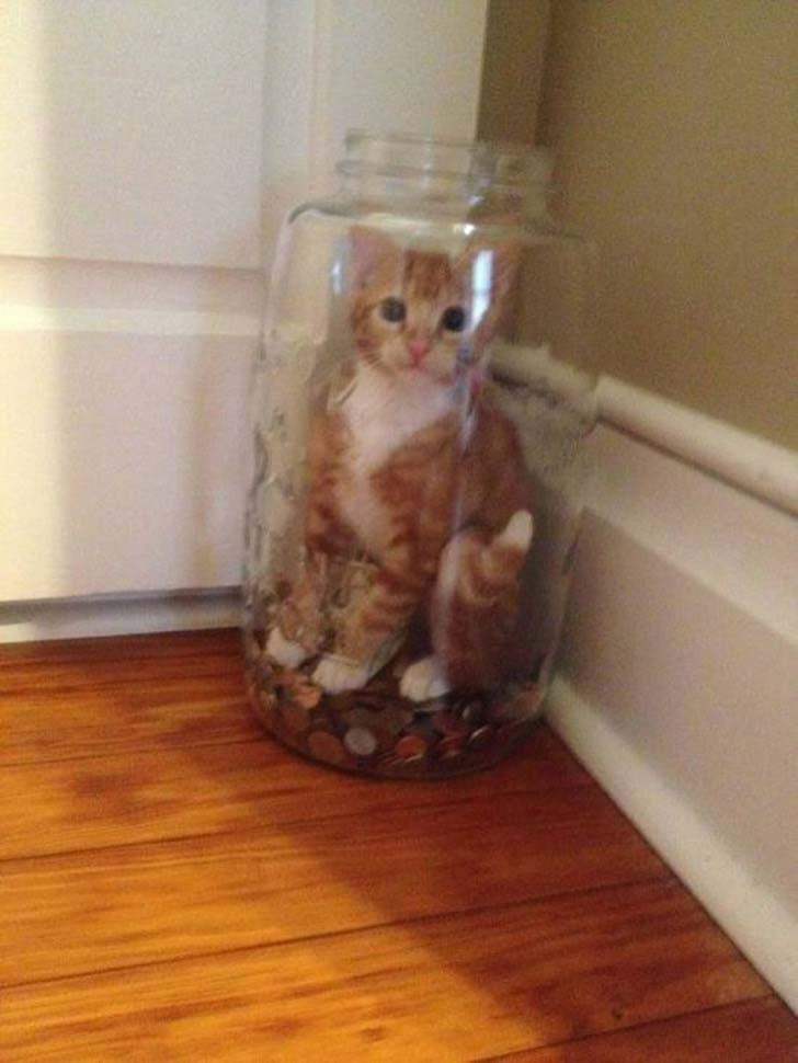 21-cats-who-definitely-regret-their-decisions_14