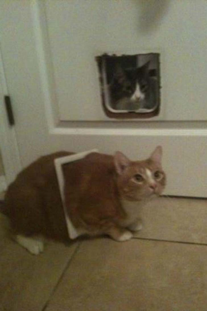 21-cats-who-definitely-regret-their-decisions_16