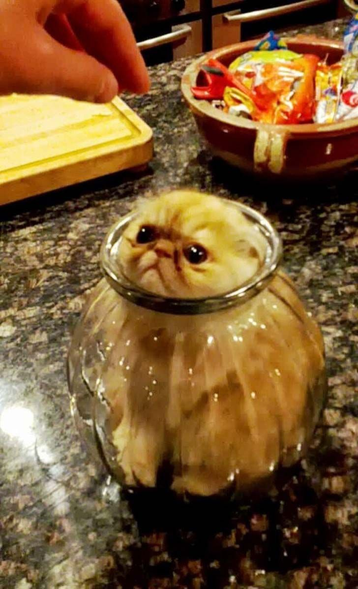 21-cats-who-definitely-regret-their-decisions_19