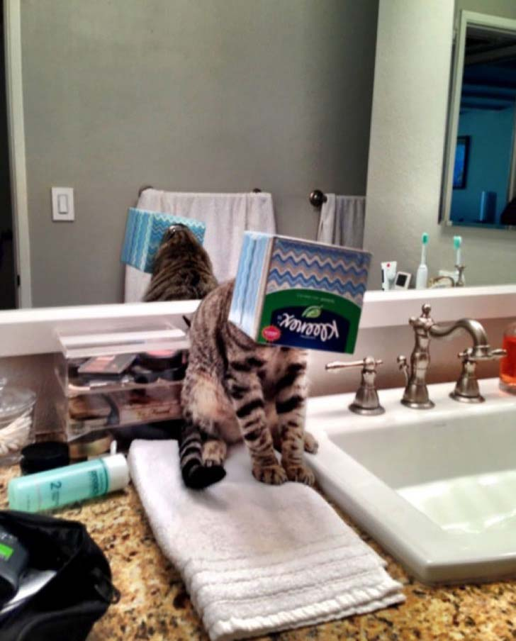 21-cats-who-definitely-regret-their-decisions_2