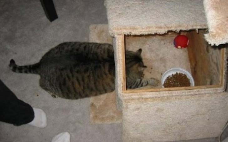 21-cats-who-definitely-regret-their-decisions_20