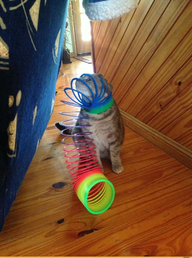 21-cats-who-definitely-regret-their-decisions_3