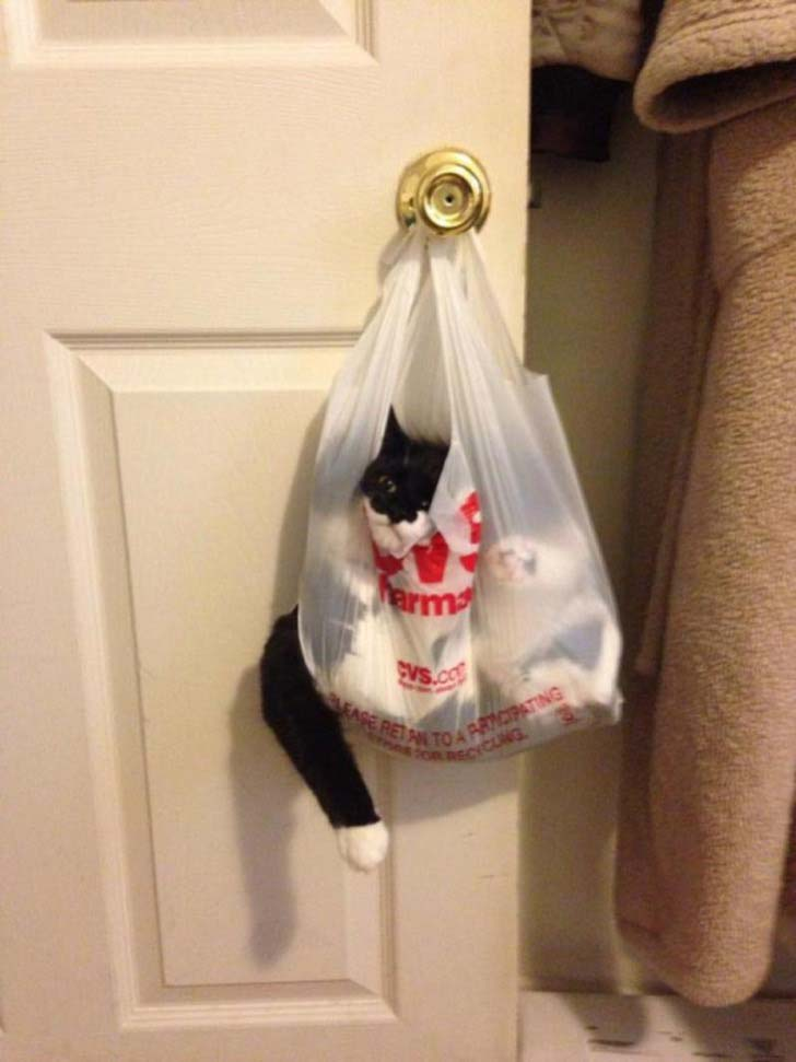 21-cats-who-definitely-regret-their-decisions_6