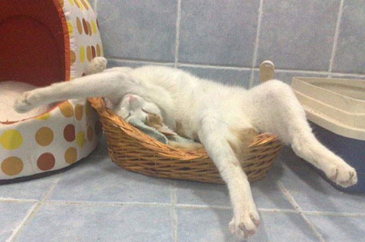21-funny-pics-that-prove-cats-dont-need-beds_16
