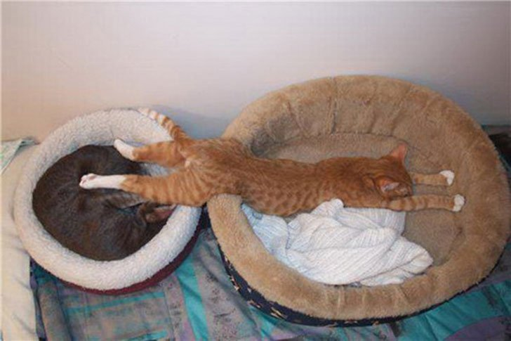 21-funny-pics-that-prove-cats-dont-need-beds_17