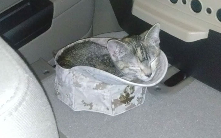 21-funny-pics-that-prove-cats-dont-need-beds_3