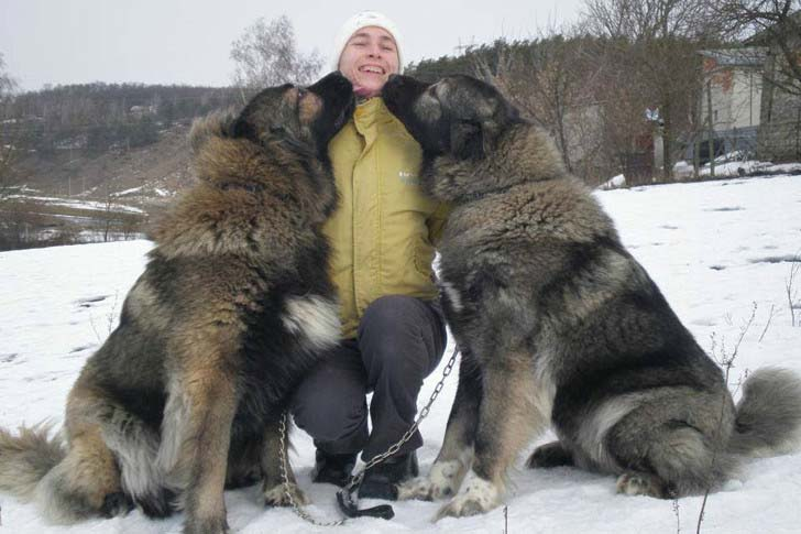 33-biggest-dogs-in-the-world_11