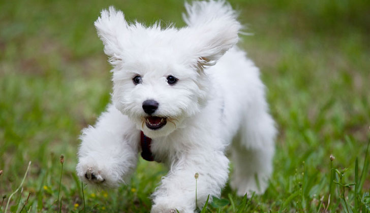 cute-dogs-with-not-stinky-smell_4