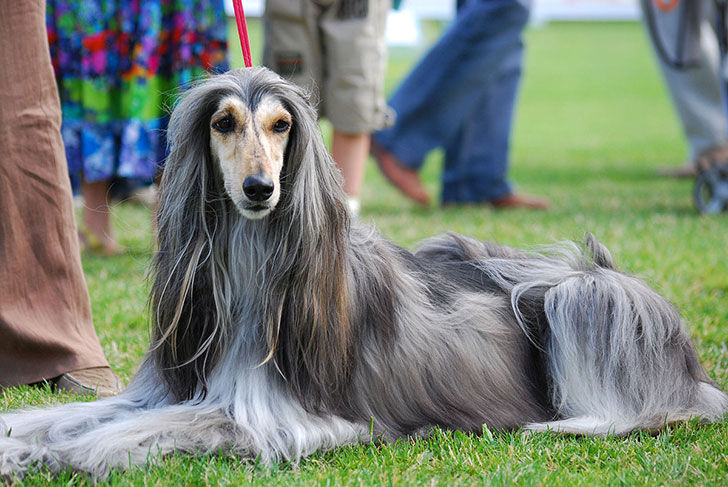 experts-agree-these-20-dog-breeds-are-not-family-friendly_11