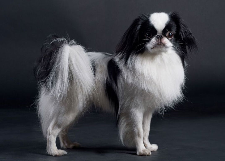 experts-agree-these-20-dog-breeds-are-not-family-friendly_15