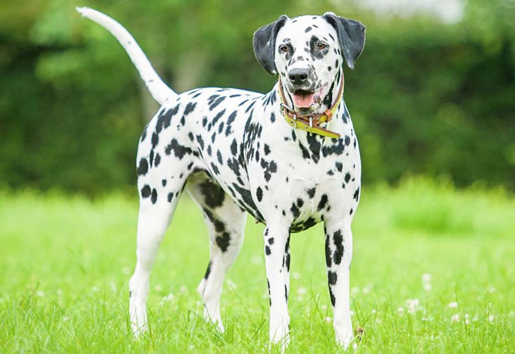 experts-agree-these-20-dog-breeds-are-not-family-friendly_8